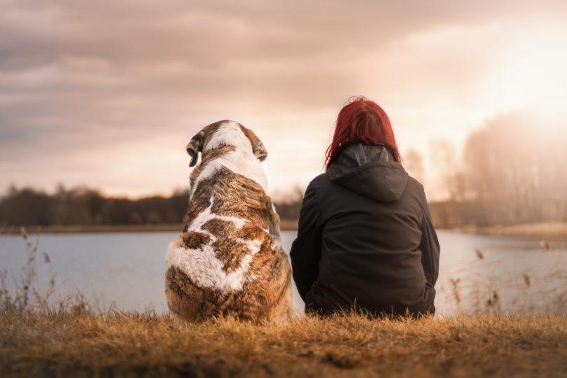 eine Person in schwarzer Jacke und ein großer braun-weißer Hund die beide am Ufer eines Sees sitzen