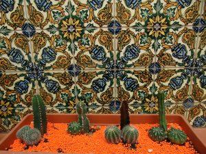 eine Kaktusaustellung im Museum die sich dem männlichen Geschlechtsteil ähneln
