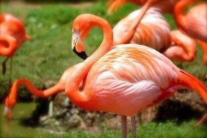 Flamingos auf einer Wiese