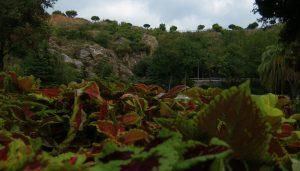 Aussicht auf Wald und Gebirge des Parks
