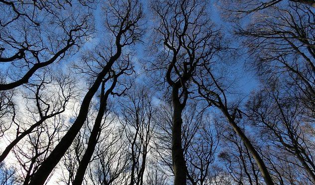 kahle Bäume von unten Richtung Himmel fotografiert mit blau bewölktem Himmel