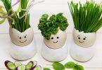 drei Eier mit netten Gesichtern darauf gemalt und mit Schnittlauch und Petersilie bepflanzt