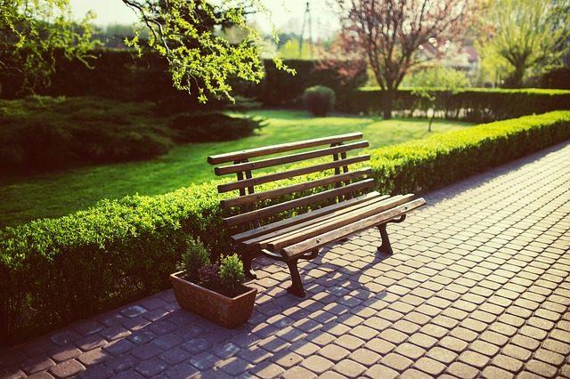 eine Bank in einem Park mit Sträuchern und Bäumen an einem sonnigen Tag