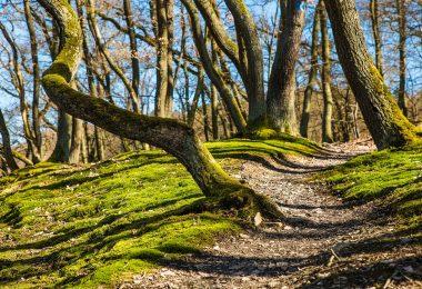schmaler Waldweg mit vielen Baumstämmen drum herum