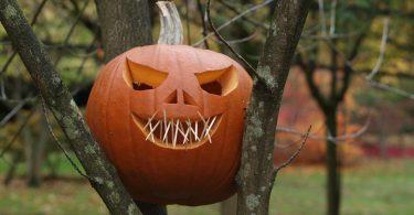 Ein Halloween Kürbis mit Zähnen aus Zahnstochern der zwischen den ästen eines Baumes festgeklemmt ist