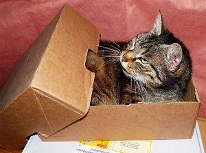 grau getigerte Katze in einer halbgeschlossenen Kiste