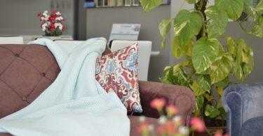 ein rötliches Sofa mit einer weißen Decke das ein buntes Kissen halb abdeckt eine hohe grüne Pflanze rechts daneben und dahinter eine weiße Esszimmergarintur