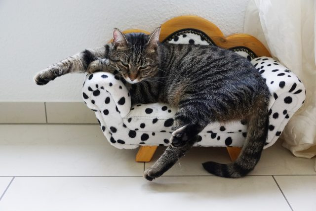 eine graue Katze die auf einem weißen Katzensofa liegt und die Hinterläufe baumeln lässt