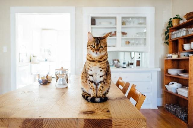 eine getigerte Katze die auf einem Holztisch sitzt