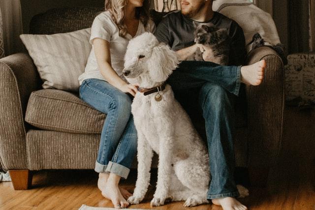 ein weißer Pudel der zwischen einem Pärchen die auf einem Sofa sitzen sitzt und der man hat eine graue Katze auf dem Schos