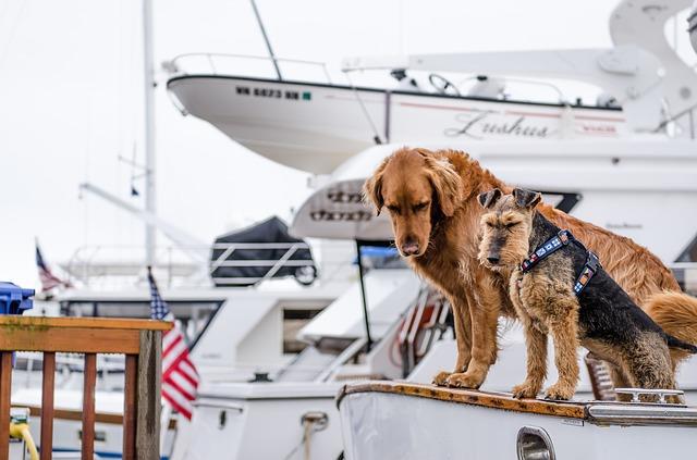 zwei Hunde die auf einem Schiff stehen und nach unten ins Wasser schauen